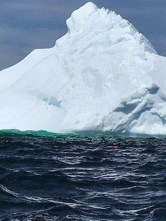 Iceberg Alley Boat Tours
