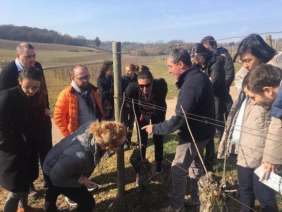 Découverte des vignes avec une groupe dans les Hautes Côtes de Beaune
