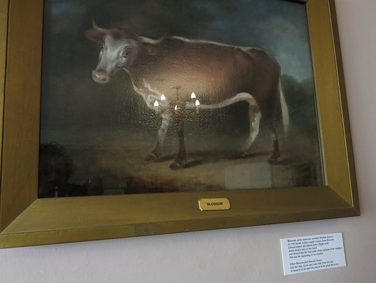 The most famous cow...