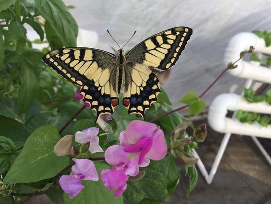 22.4.19: מדברים על דבורים – סיור בכוורת שעל גג הסנטר והכרת העולם הקסום של הדבורים: https://app.icount.co.il/m/17ba0/c38750p9u5c9c749ede 23.4.19: טבע עירוני - עטלפים, דבורים ופרפרים חיים יחד בסנטר: https://app.icount.co.il/m/dbcc8/c38750p2u5c9b567c79