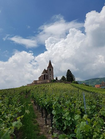 Alsace wine tour. Visit one of the icons of Alsace.