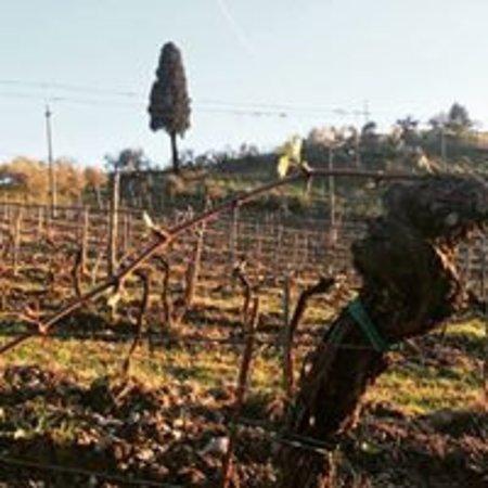 spring in the vineyards
