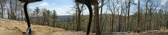 Troy, Caroline du Nord: Panoramic of top of Daniels