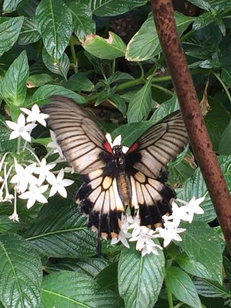 Victoria Butterfly Gardens Central Saanich 2020 All