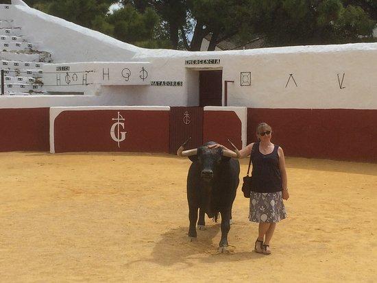 Mijas, Spain: A very friendly bull