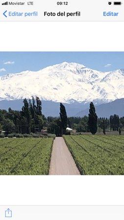 Mendoza Wine Bike Tour: Mendoza, Lujan de Cuyo