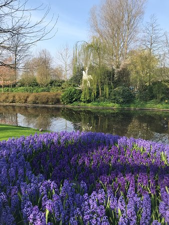 Keukenhof: Very  beautiful place