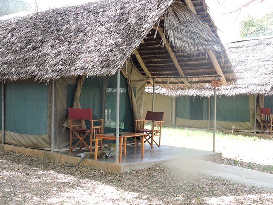 Tarangire Safari Lodge: Note the monkeys playing on the front porch of the tent.