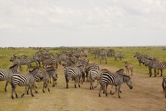 Makasa Tanzanian Safaris