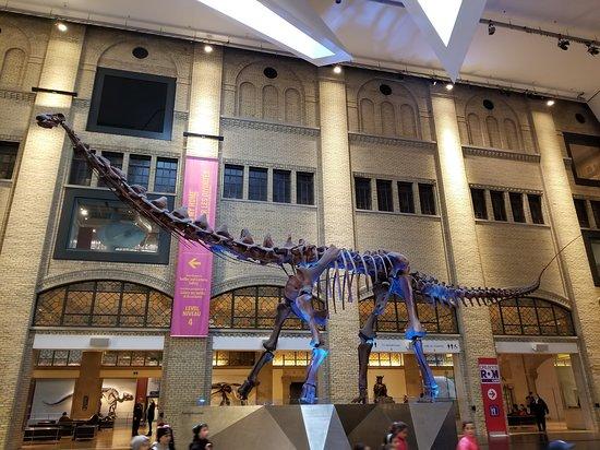 Royal Ontario Museum: Large Dinosaur