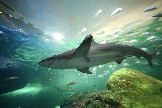 Billet coupe-file: aquarium Ripley...