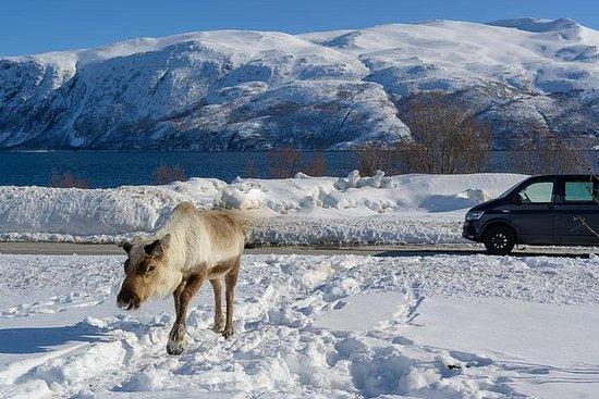 Voyage dans l'Arctique: île de...