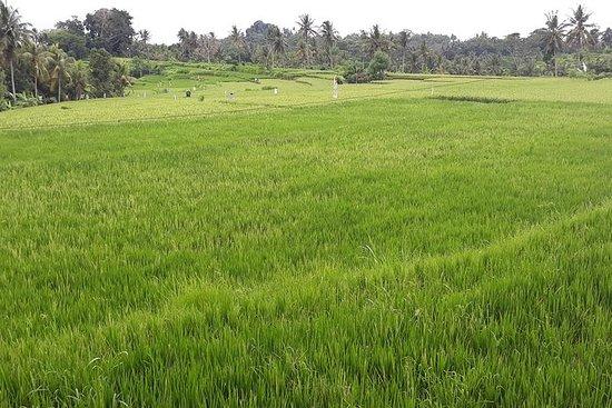 La visite touristique d'Ubud