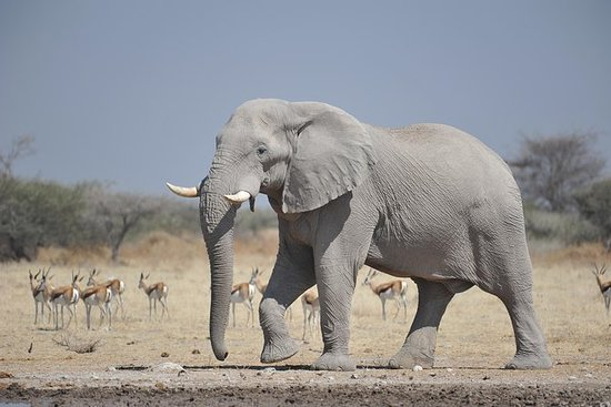 Chutes Victoria et safari au Chobe au...