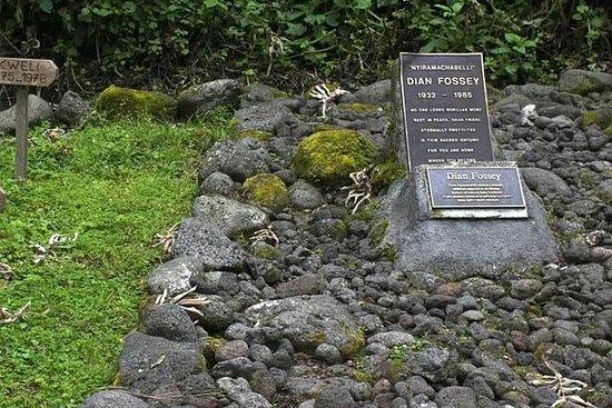1天Dian Fossey Tomb远足