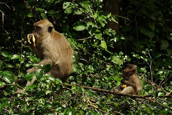 From Khao Sok: Meet Some of Thailand's Most Treasured Animals