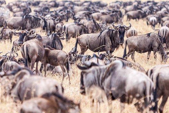 4-Day Masai Mara - Private luxury safari: 4-Day Great Migration Safari 2019 - Privately