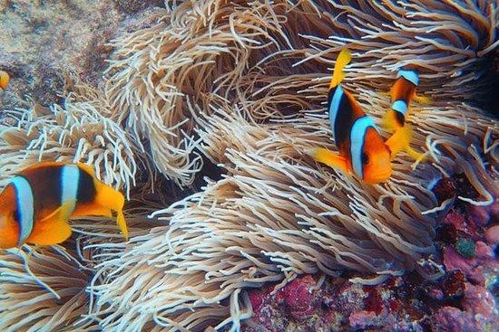 珊瑚岛礁浮潜,当地村庄参观和品尝当地美食之旅