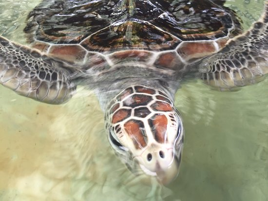Visit a Sea Turtle Conservation centre during the Turtles & Waterfalls bike tour.