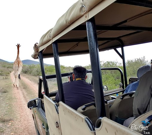 Garden Route, South Africa: Head out for a game drive/ Safari and see a wide variety of Southern African animals