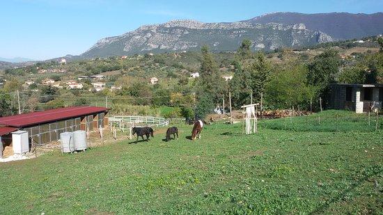 Azienda Agricola Maglio