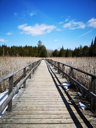 The Marsh Boardwalk is a favourite destination at Ken Reid Conservation Area.
