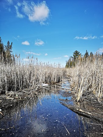 Beavers, muskrats and more make their home in the marsh at Ken Reid Conservation Area.