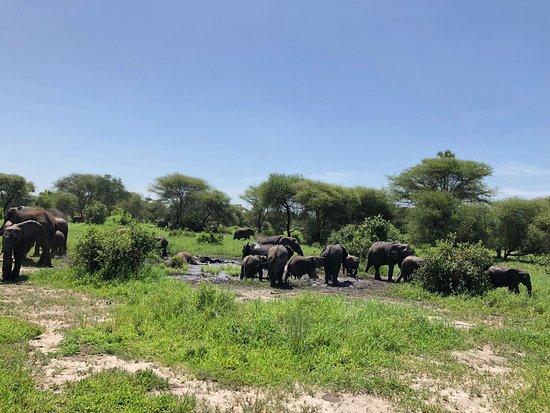 Tarangire Safari Lodge: There were so many elephants
