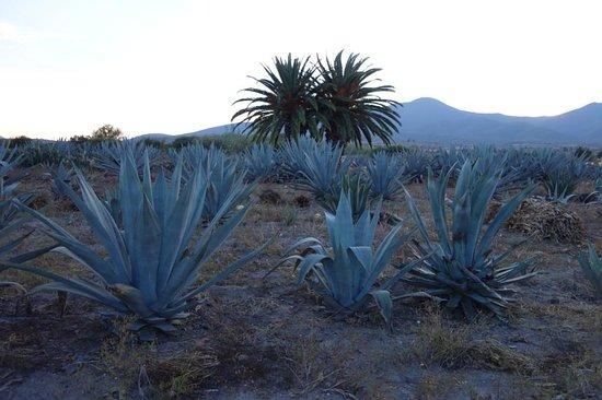 Pulque Tours Oaxaca