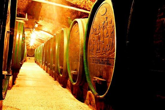 Ptuj Wine Cellar (Ptujska Klet)