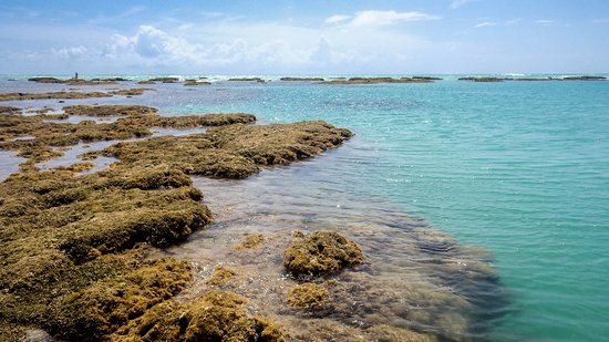 Antunes Maragogi, o Caribe é aqui... Passeio que cheguei caminhando nas piscinas naturais, basta acertar o horário da maré.