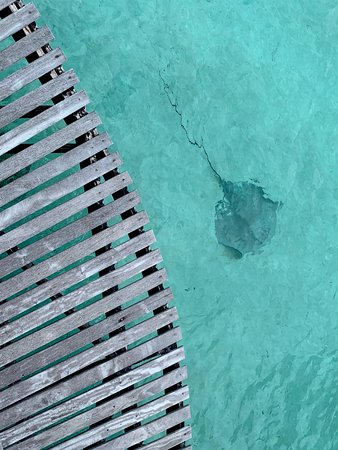 a ray swimming by our deck