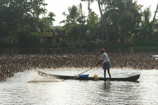 Alappuzha, Indien: Cartoline dalle Backwaters, India