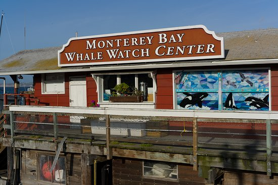 ‪Monterey Bay Whale Watch‬
