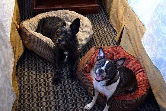 Best Western Premier Chateau Granville Hotel & Suites & Conf. Centre: pet friendly