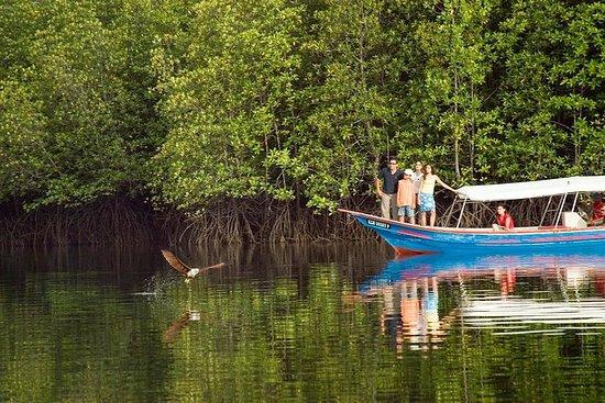 Tour della foresta di mangrovie di