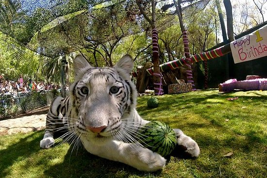 Siegfried & Roy's Secret Garden and...