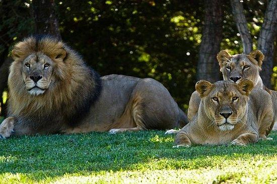 动物园de la Barben免排队门票