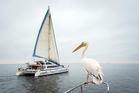 Sail daily from the Walvis Bay...