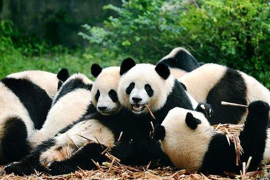 Chengdu Giant Panda Base Park