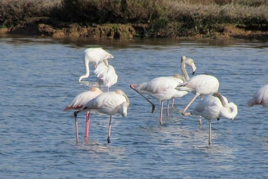 Observación de aves en Abicada y en...