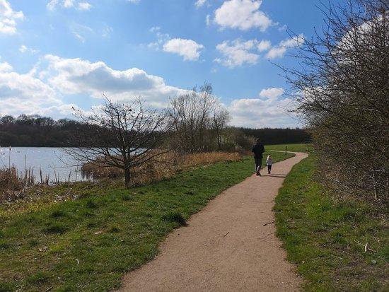Ashby de la Zouch, UK: Willesley Wood
