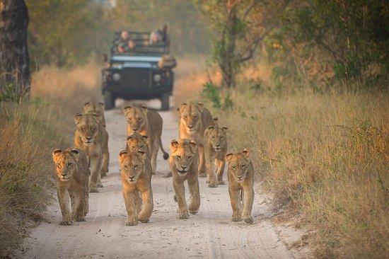 Authentic Safari Travels