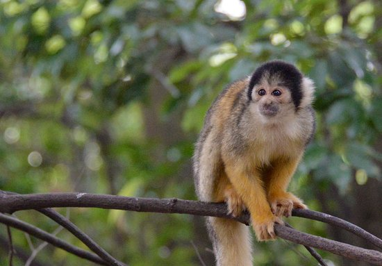 Japan Monkey Centre: Museum and Zoo for Nonhuman Primates
