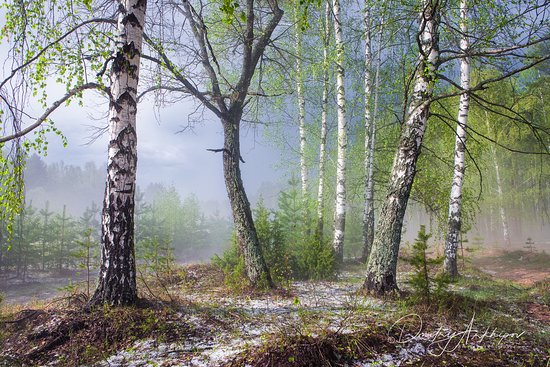 Rusia: Весенний туман.