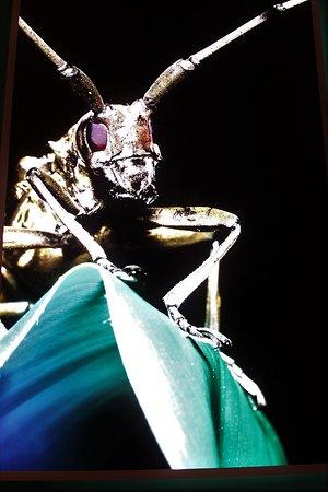 National Taiwan Museum: Projektion von Insekten