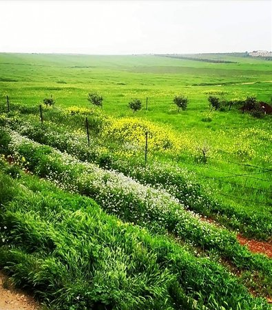 Ar Ramtha, Jordan: ❤️ North Jordan 🇯🇴 ❤️