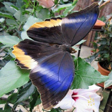 Allgäuer Schmetterling Erlebniswelt