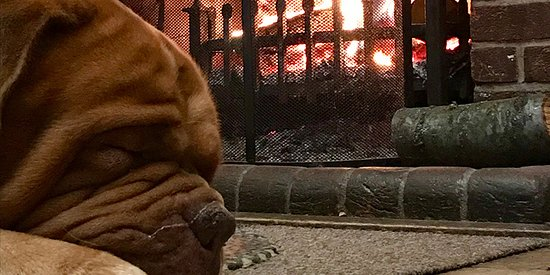 Our dog keeping himself warm by the fireplace.