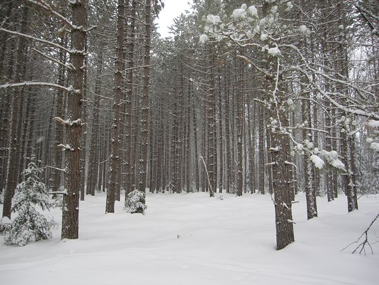 Rapid River, MI: along the snowshoe trail - March 10, 2019 - beautiful trails